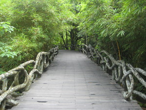Yanoda rainforest